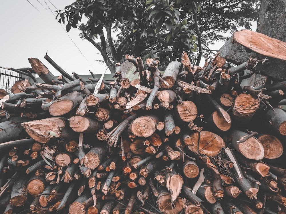 brown tree logs during daytime