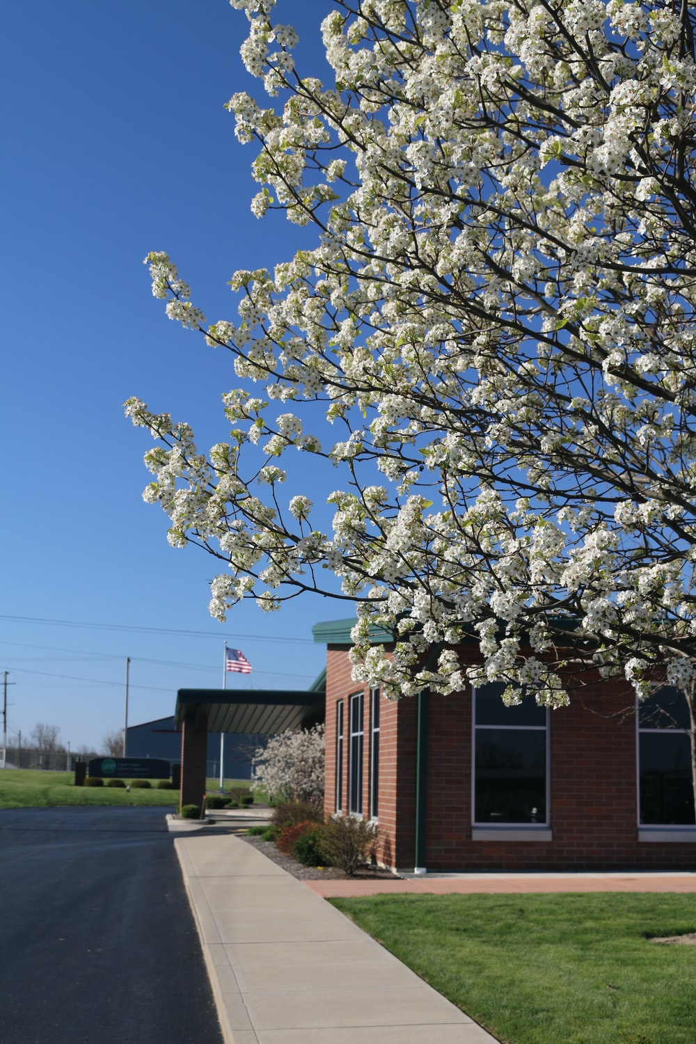 white cherry blossom tree near brown building during daytime