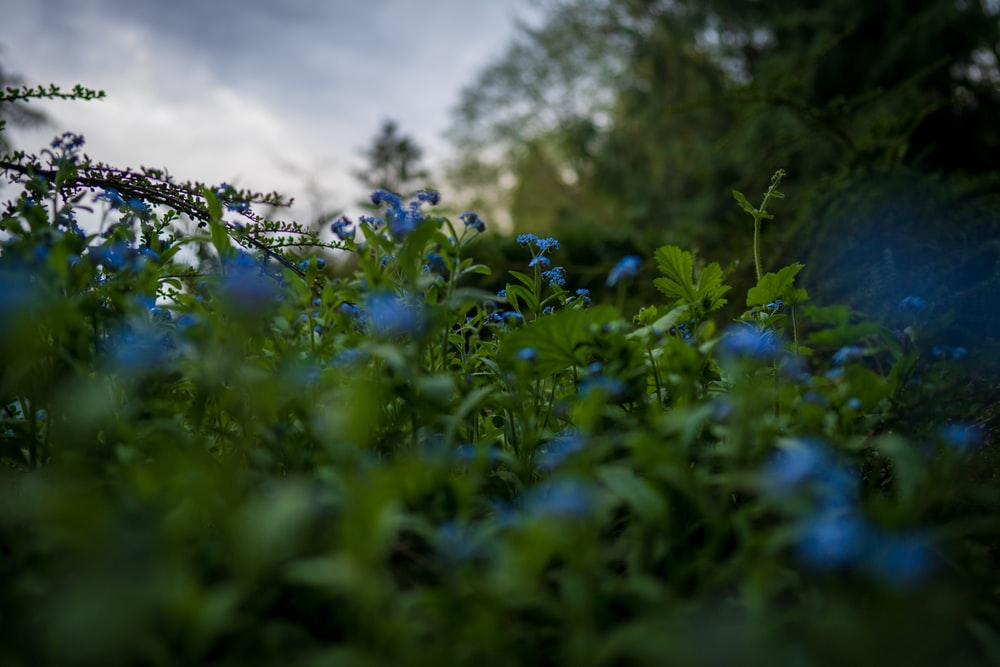 blue flowers under white clouds during daytime