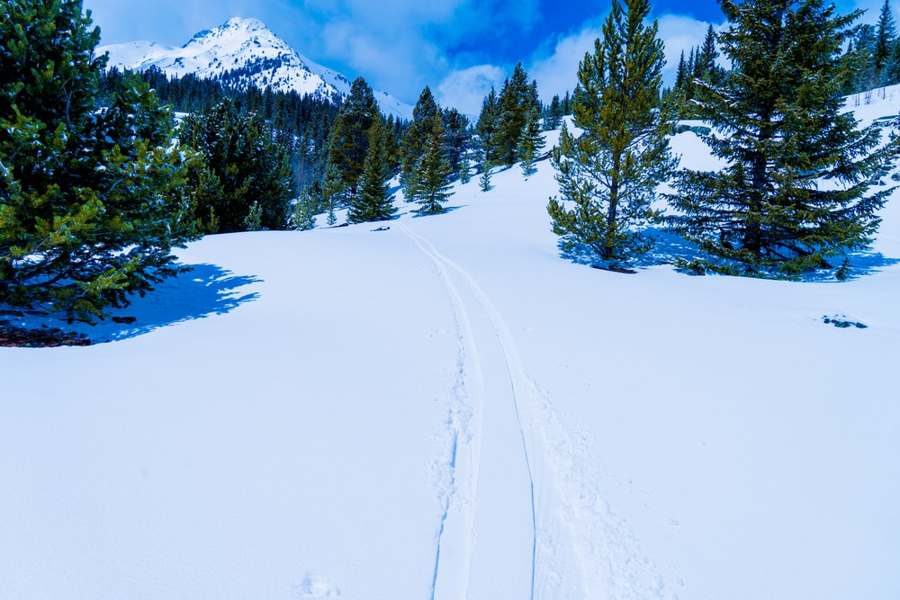 snow covered road near green pine trees and mountain during daytime