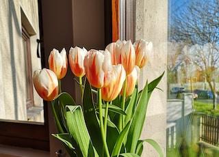 pink tulips in brown basket