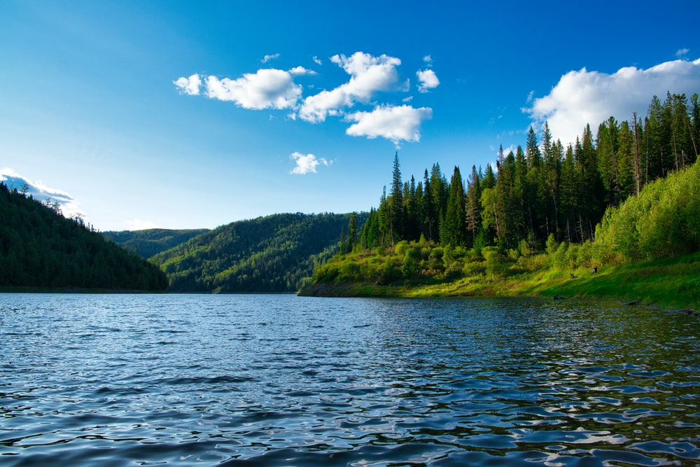green trees beside body of water under blue sky during daytime