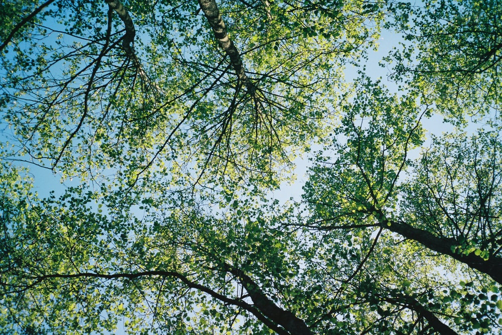 green leaf tree under blue sky during daytime
