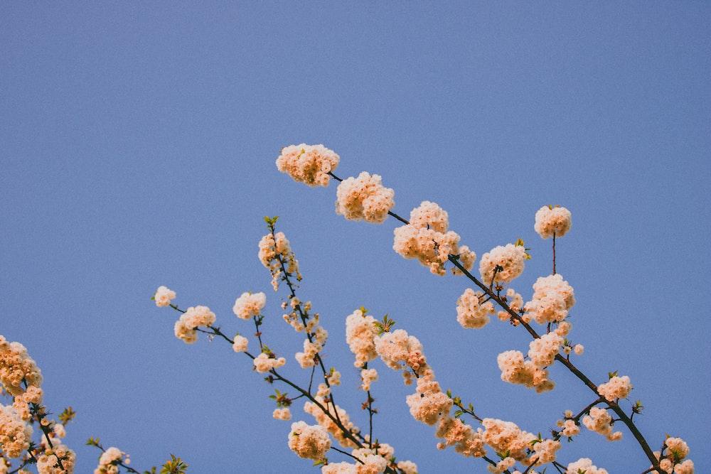 brown flower under blue sky during daytime