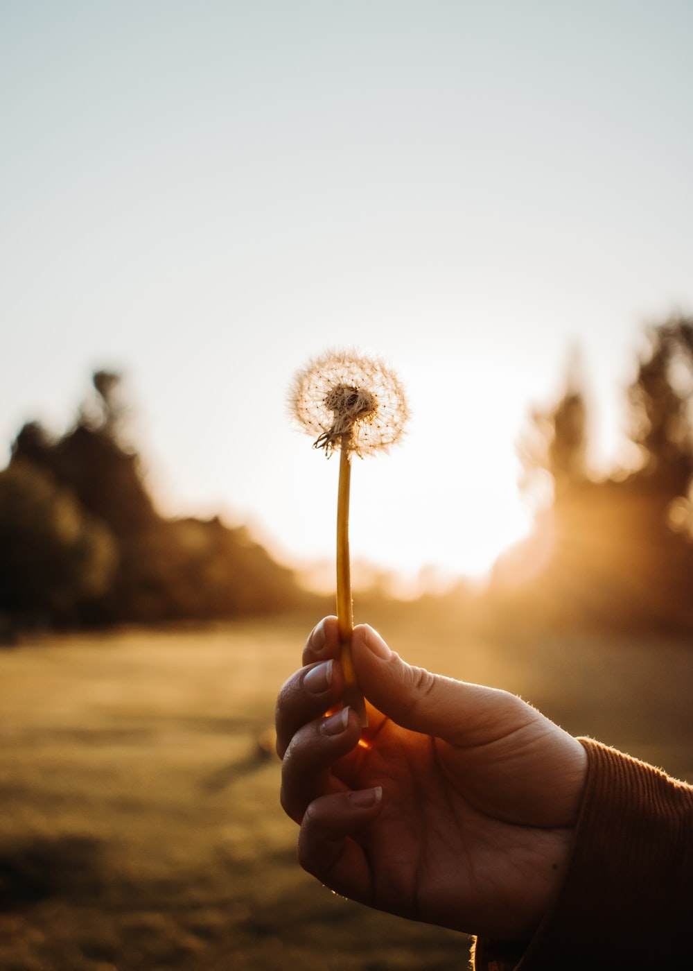 person holding white dandelion flower during daytime