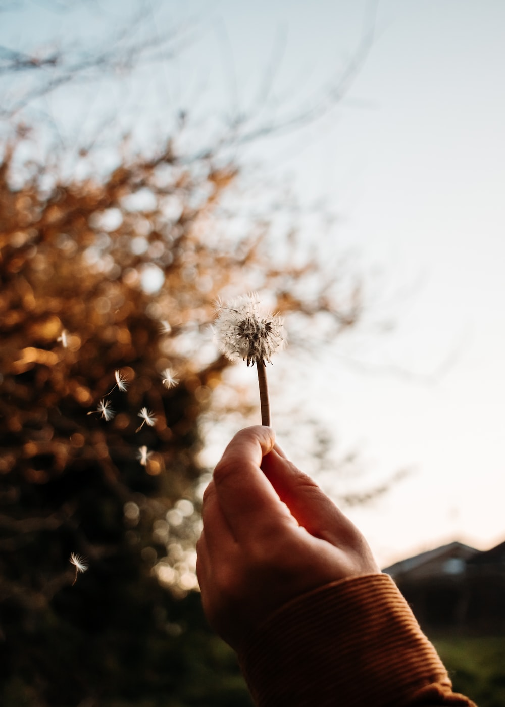 person holding white dandelion during daytime