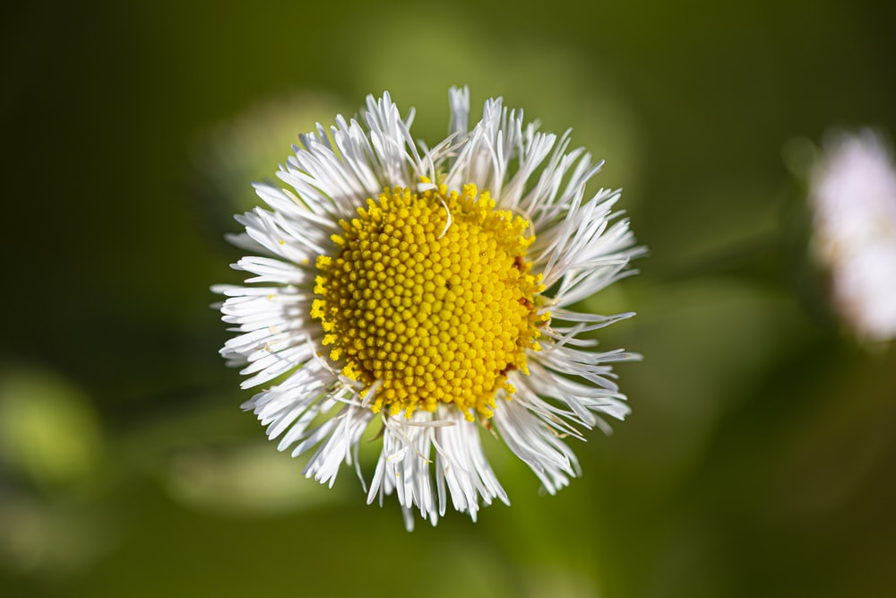 white and yellow flower in tilt shift lens