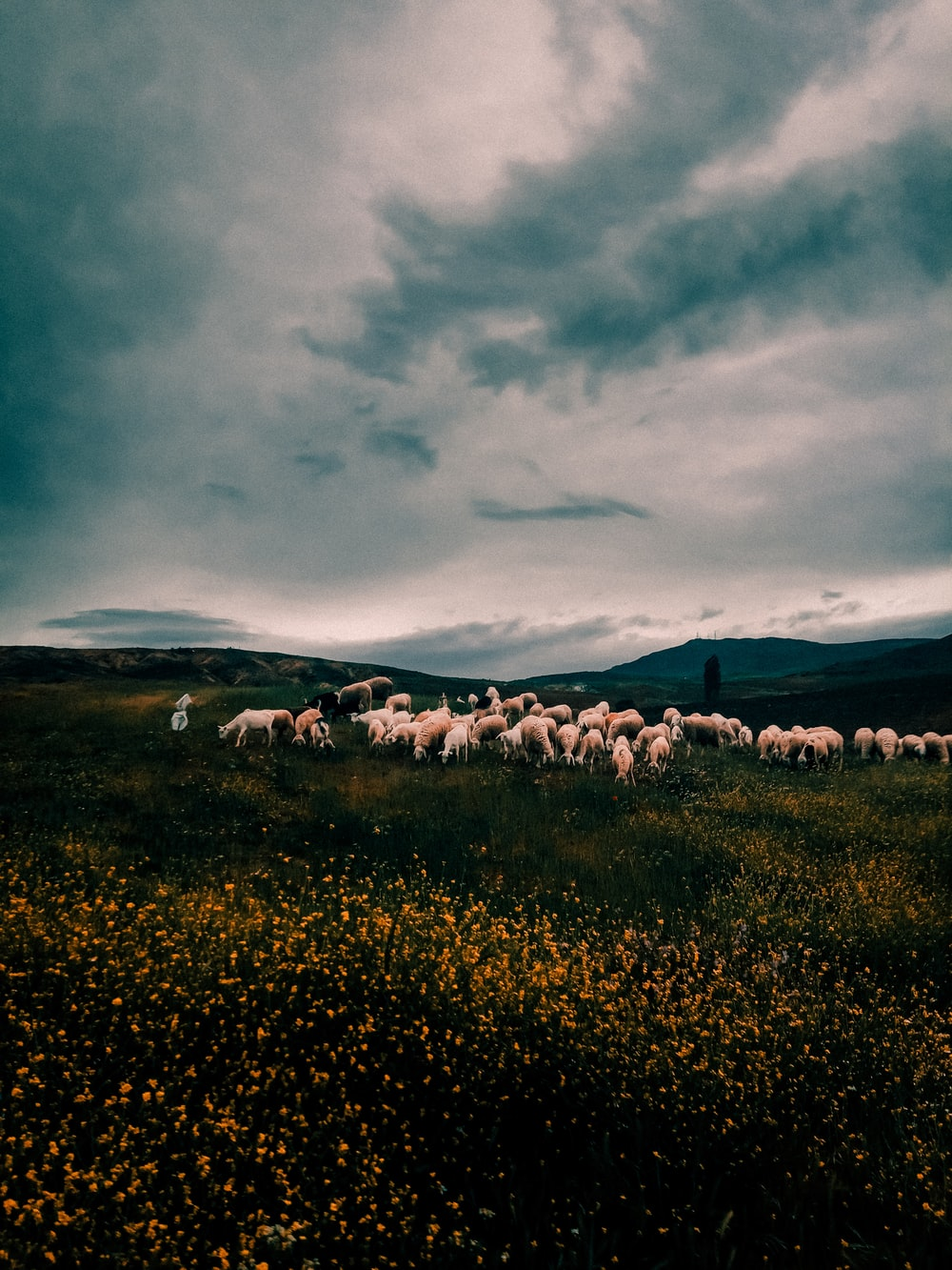 white sheep on green grass field under cloudy sky during daytime
