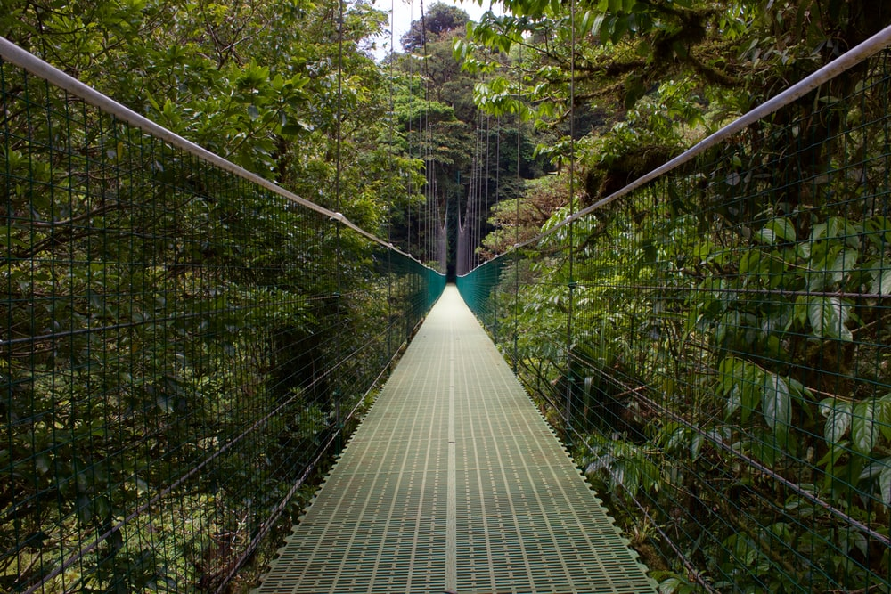 gray wooden bridge in forest during daytime