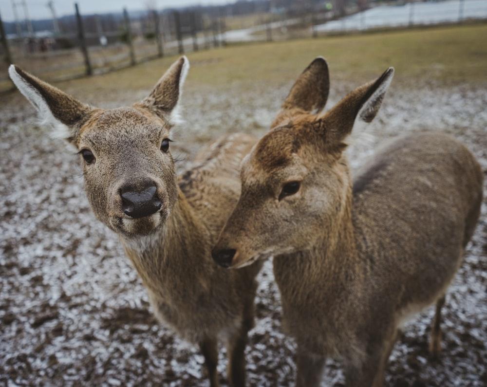 brown deer on gray field during daytime