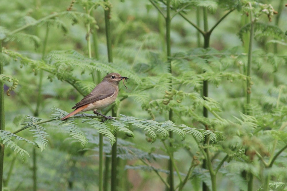 brown and gray bird on green plant