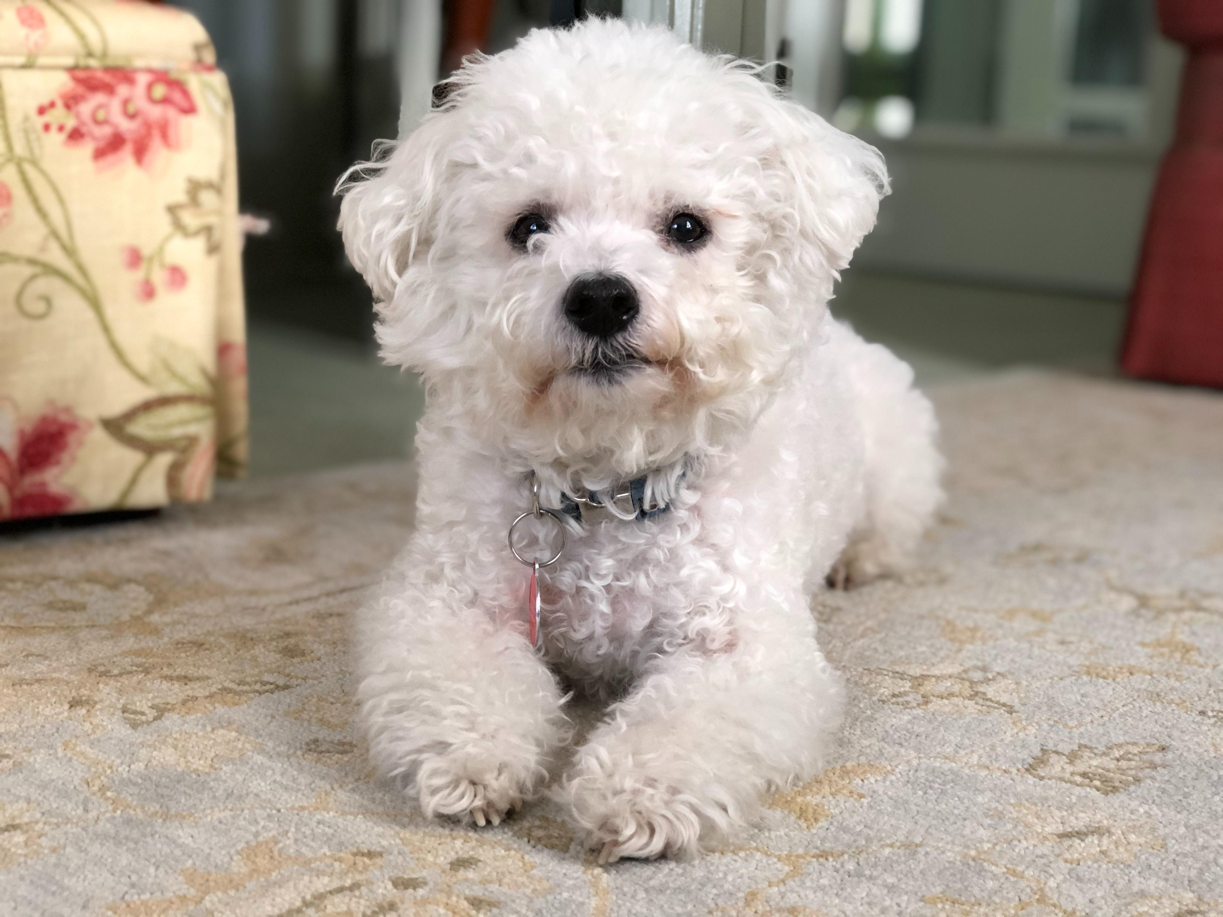 7 Great Dog Breeds for Seniors