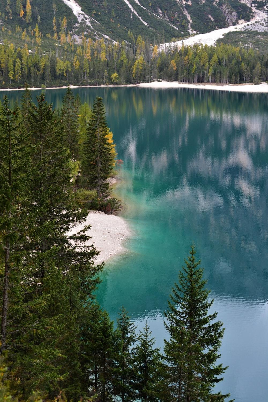 green pine trees beside blue lake during daytime