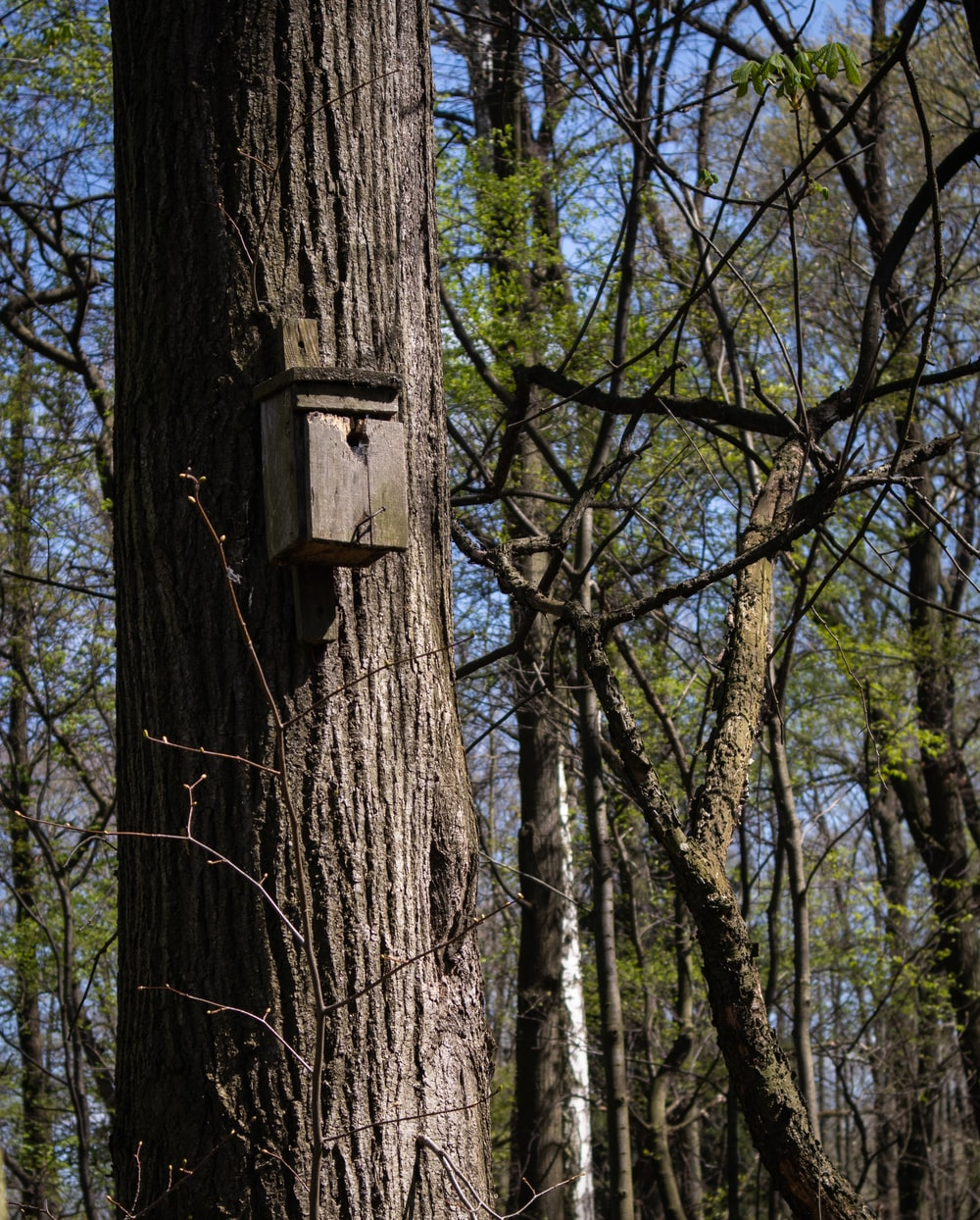 brown wooden birdhouse on brown tree trunk