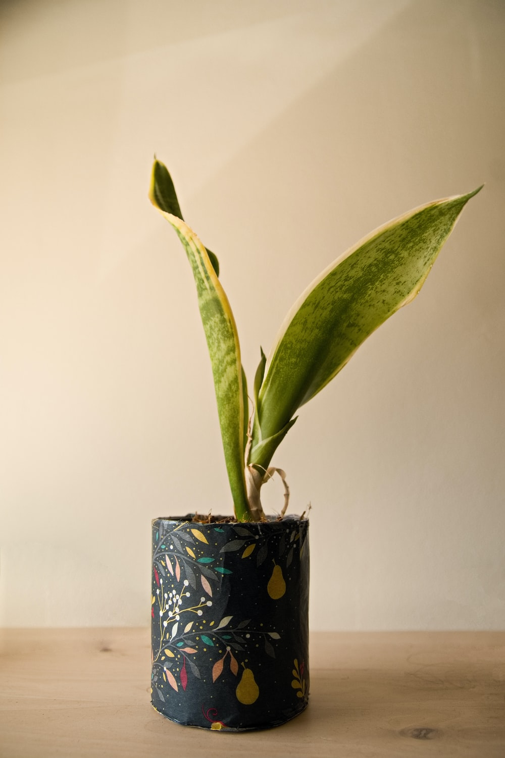 green plant on blue and white floral ceramic vase