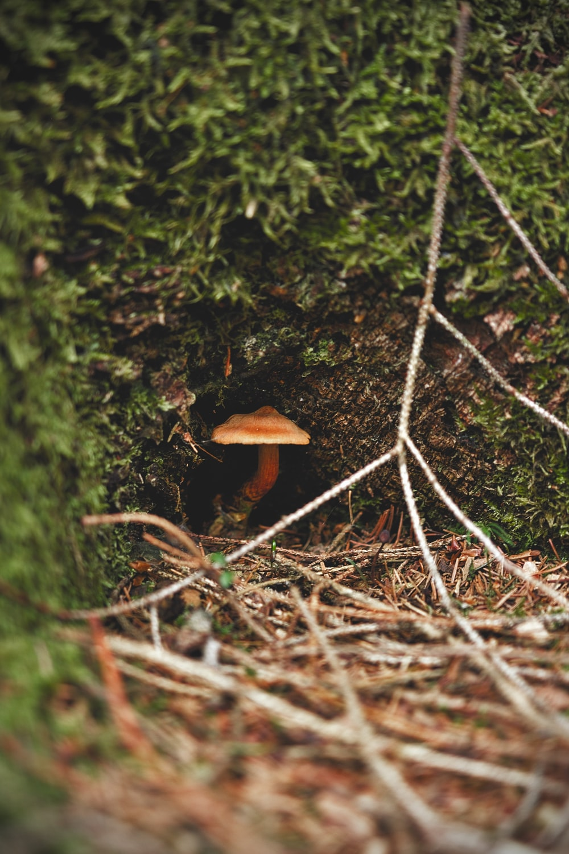 brown mushroom on green moss