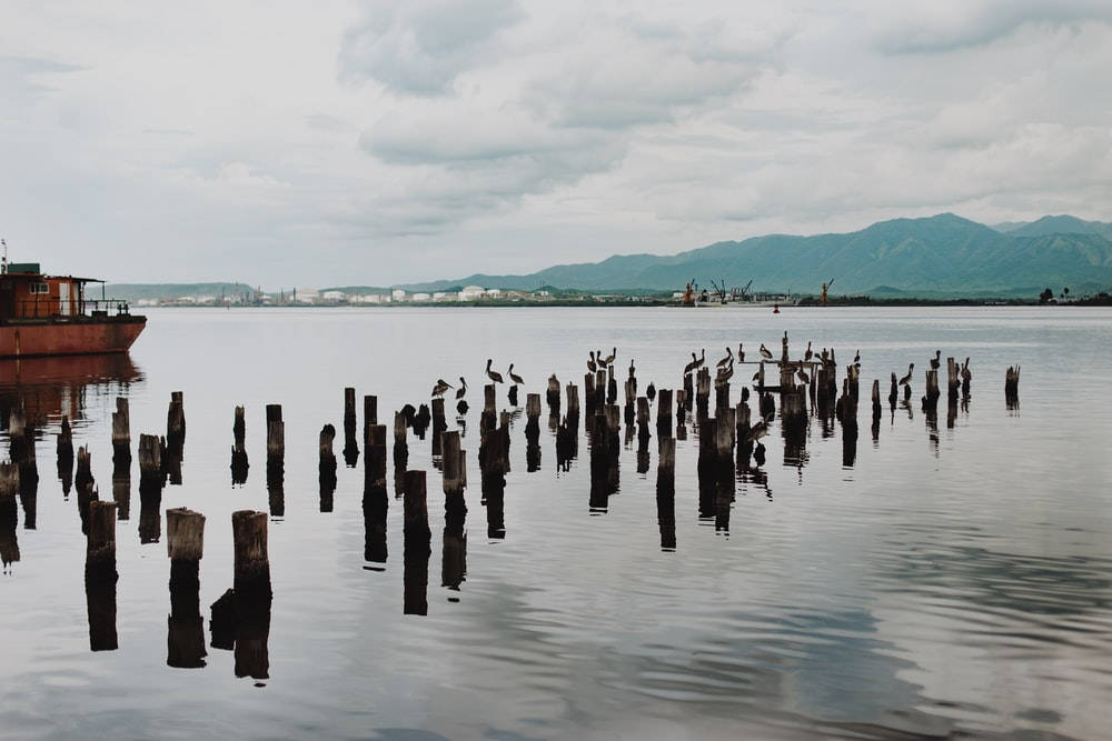 brown wooden poles on body of water during daytime