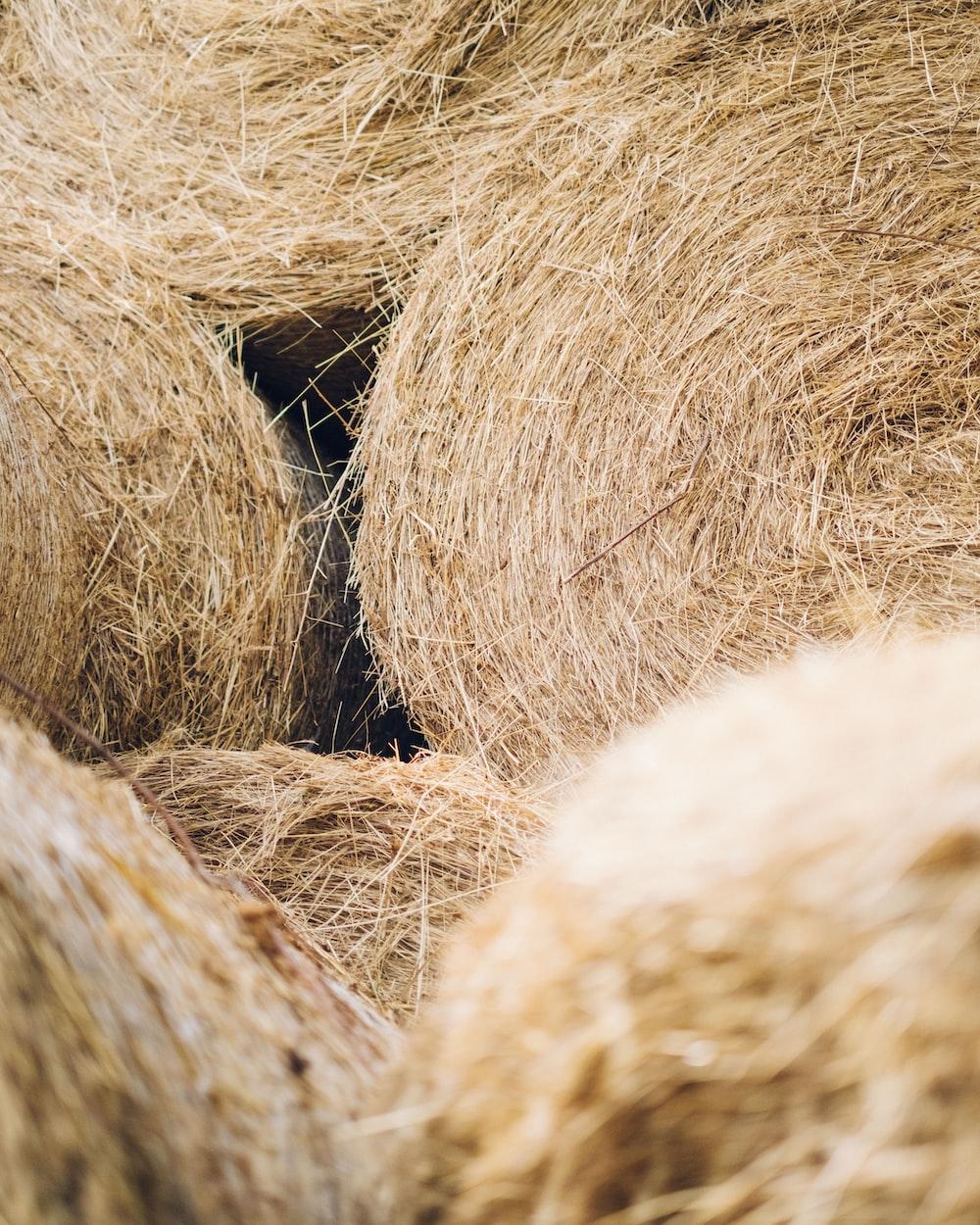 brown hay stack on brown wooden rack