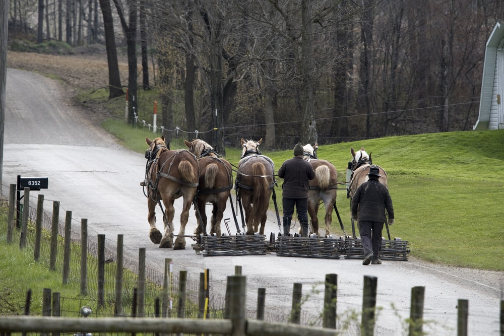 people riding horses on road during daytime