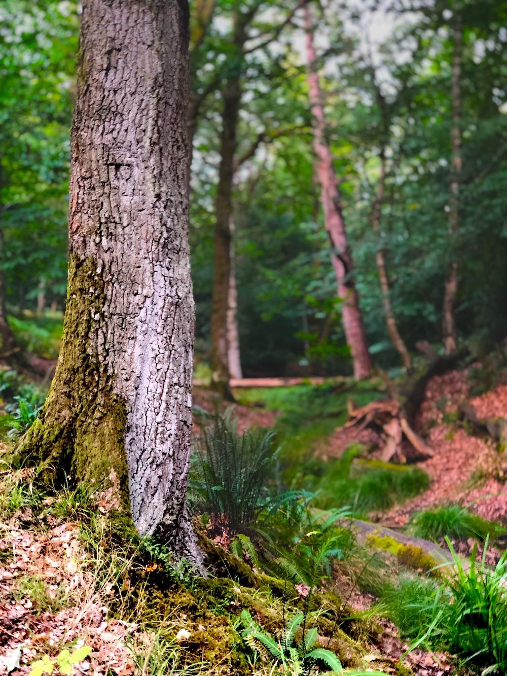 brown tree trunk on green grass field