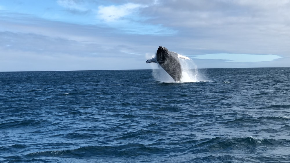 black whale on blue sea under blue sky during daytime