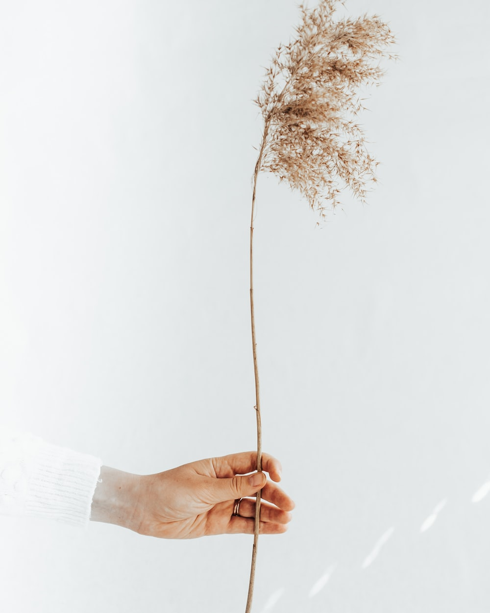 person in white long sleeve shirt holding brown dried leaf