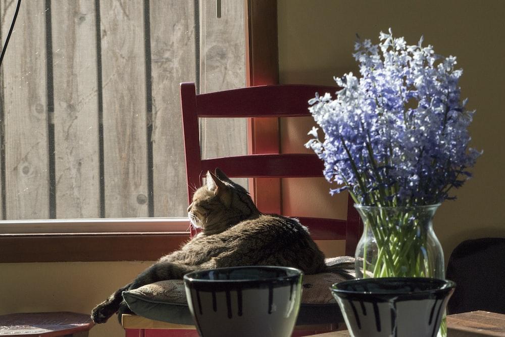 brown tabby cat on white ceramic bowl