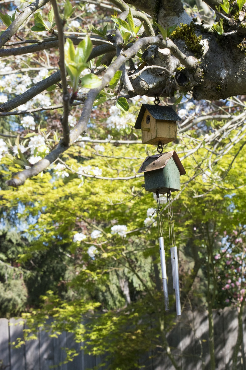 brown wooden birdhouse on tree branch during daytime