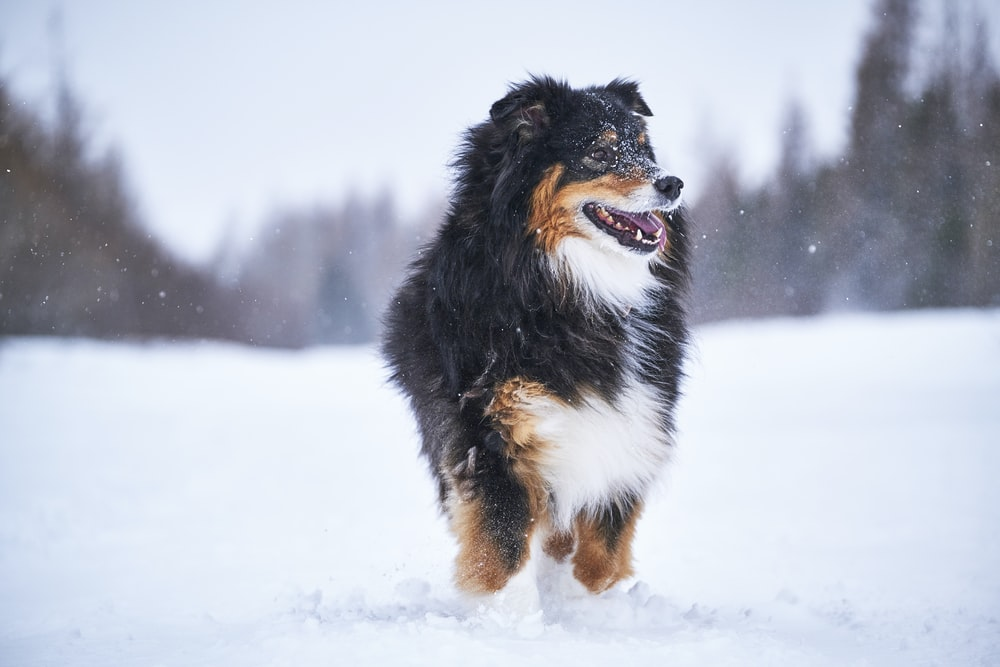 black white and brown long coated dog on snow covered ground during daytime