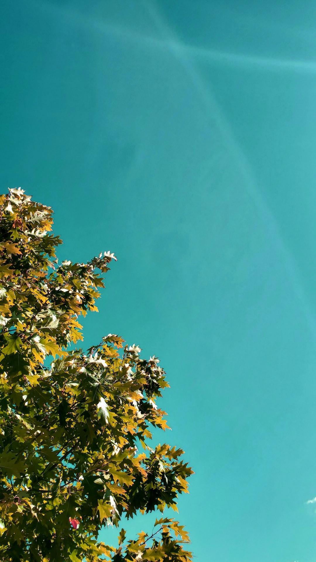 Bottom-up shot of a beautiful tree.