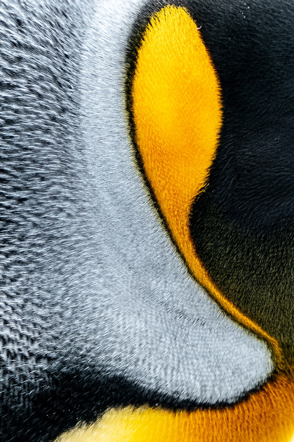 gray yellow and black penguin