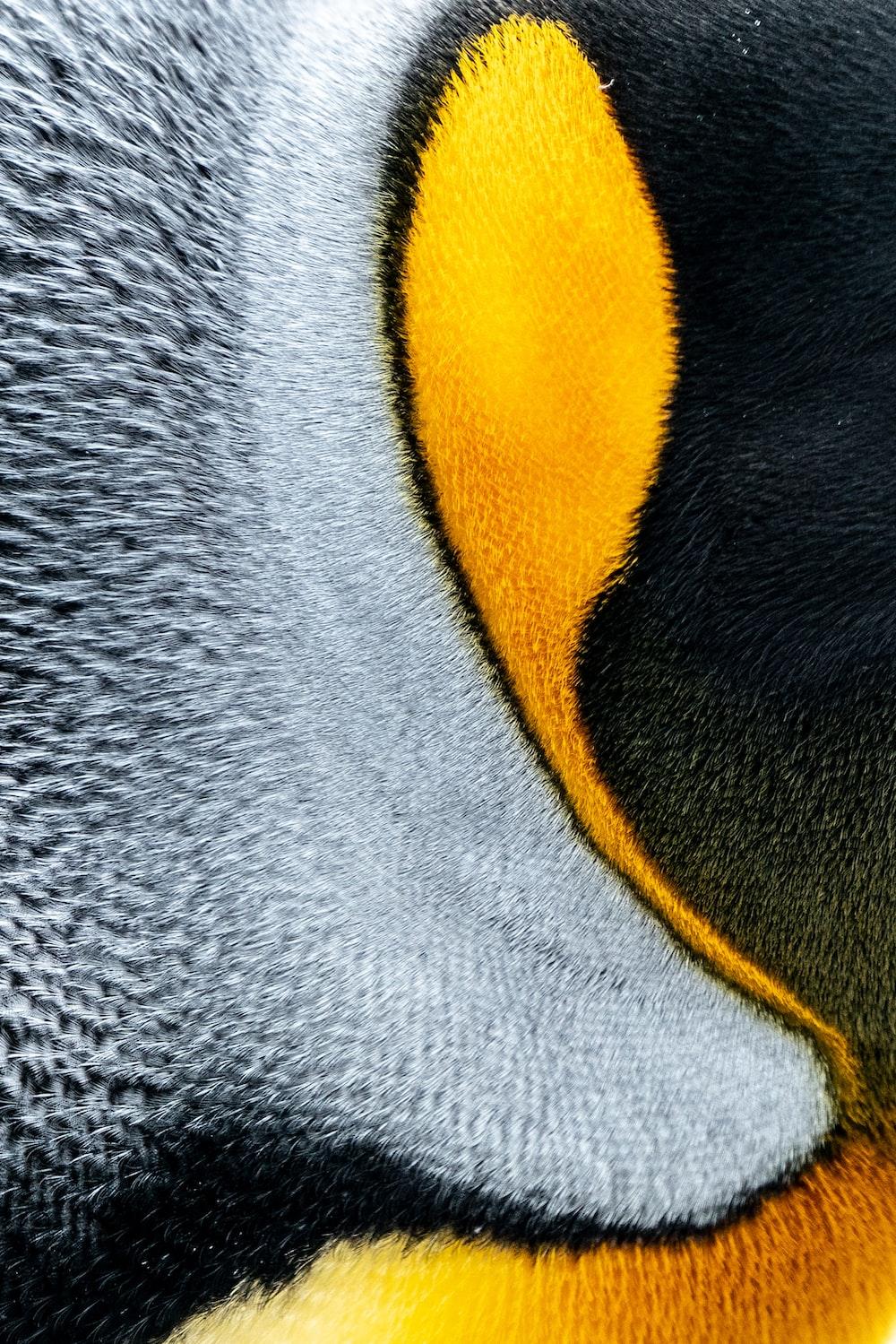 gray yellow and black penguin