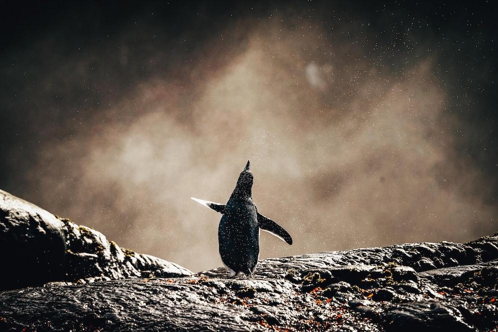 black bird on gray rock