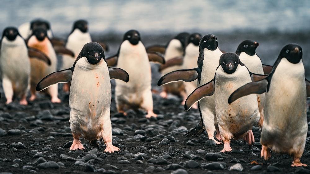 penguins on black sand during daytime