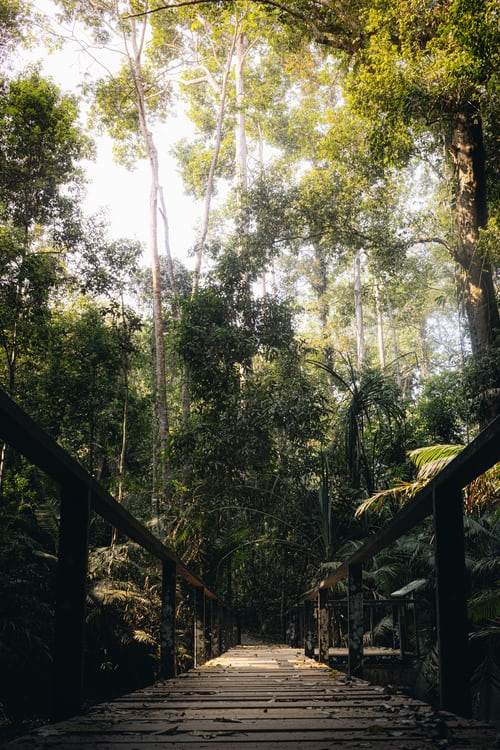 Khao Yai National Park, Places to Visit in Thailand in November
