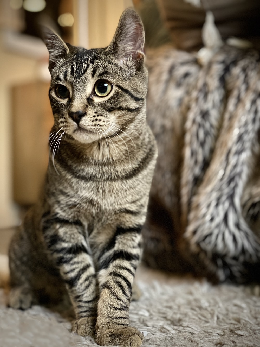 brown tabby cat on brown textile