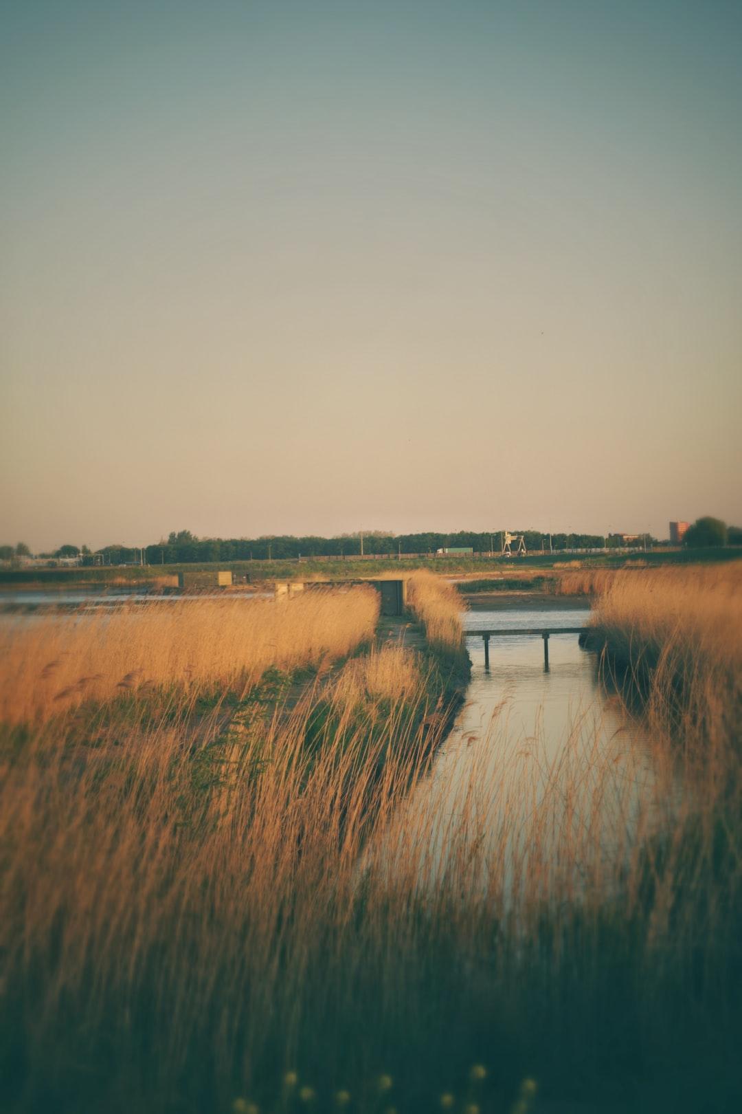 Last light on the polder