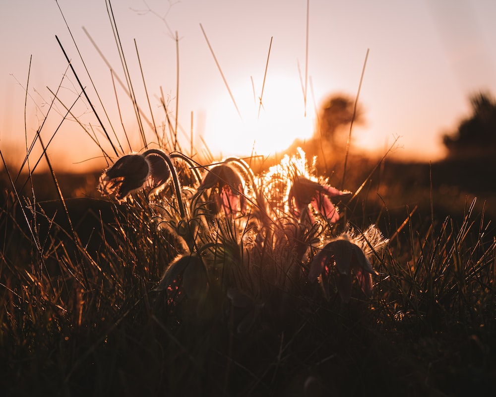 woman in brown long sleeve shirt sitting on brown grass field during sunset