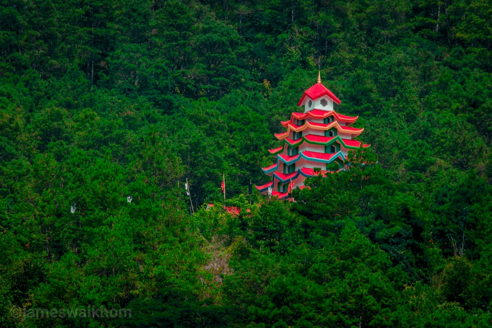 red and white pagoda temple surrounded by green trees during daytime