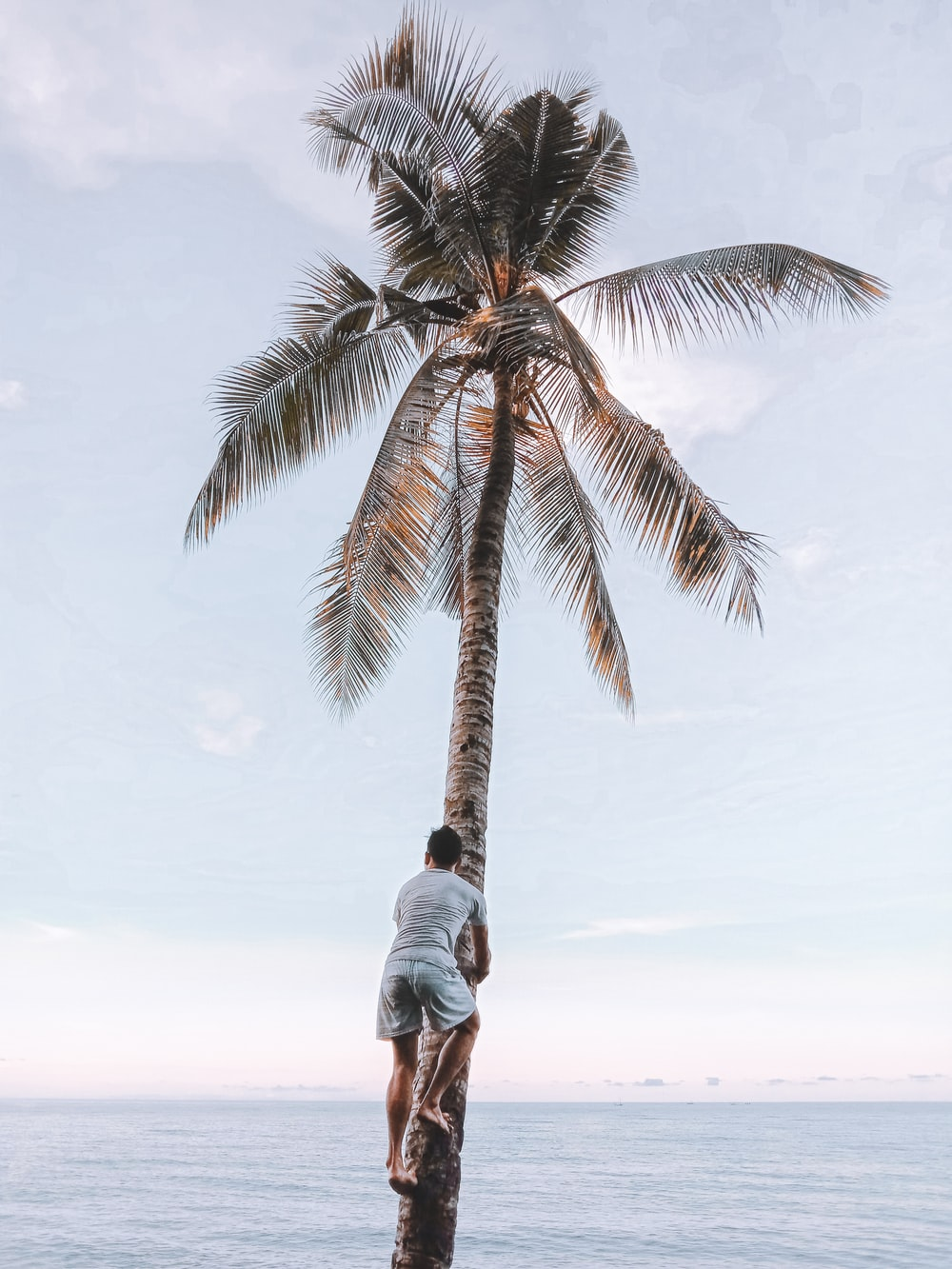 man in white shirt standing beside palm tree during daytime