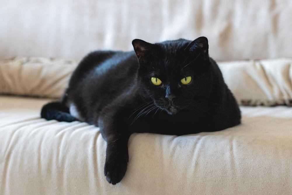 black cat on white textile