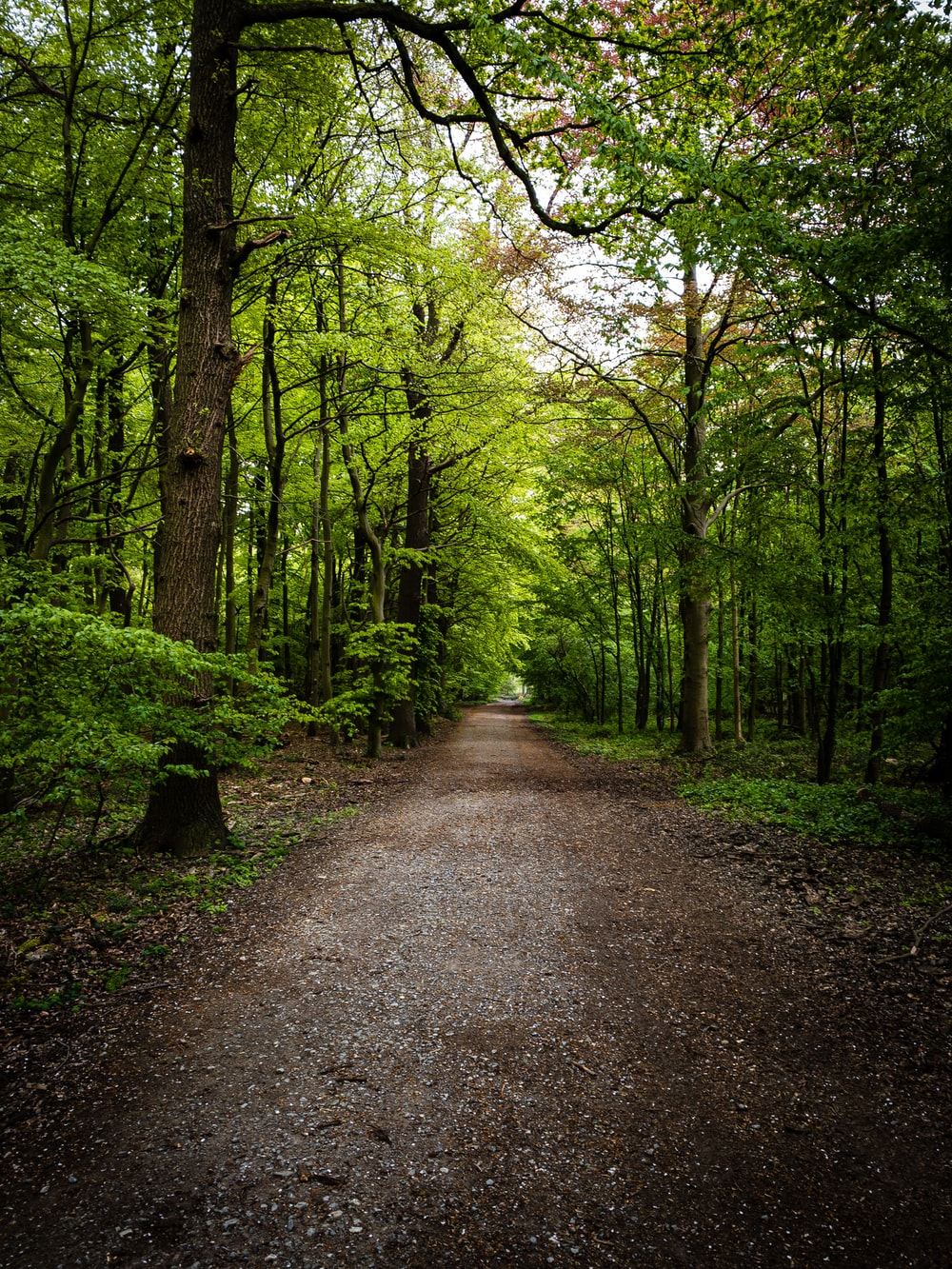 gray pathway between green trees during daytime