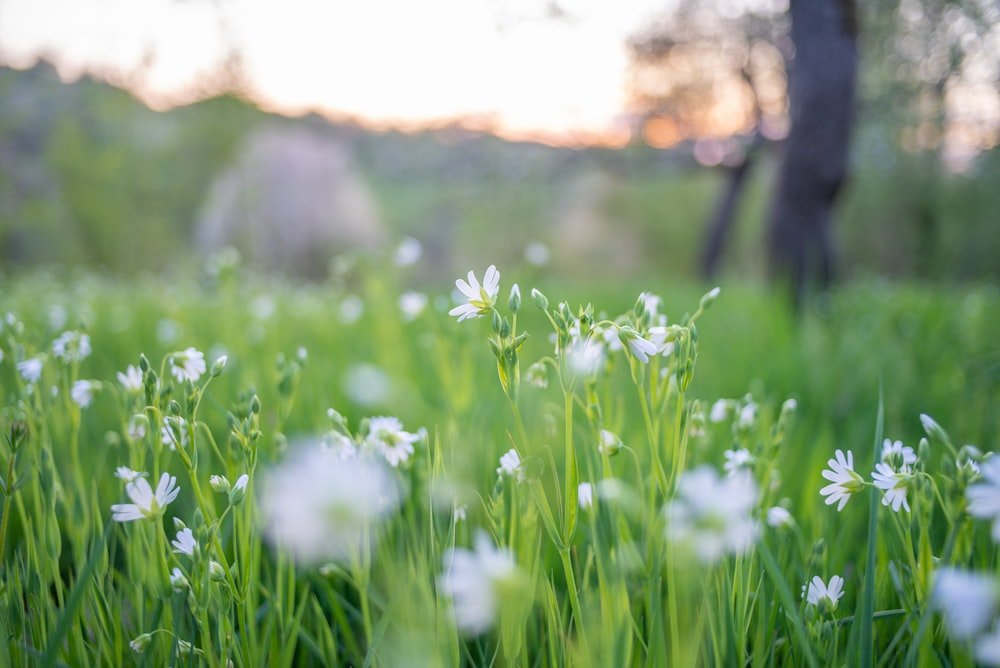 white flower on green grass field during daytime