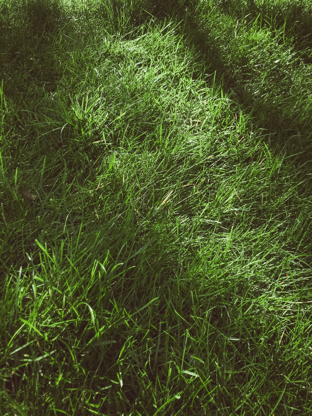 green grass field during daytime