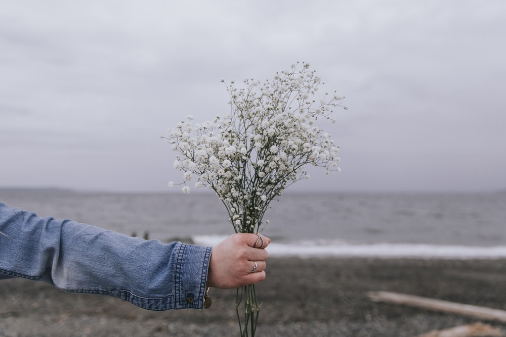 person holding white flower near body of water during daytime