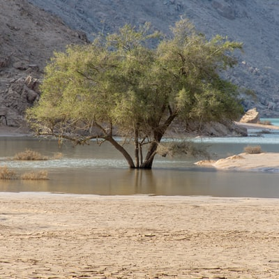 brown tree near body of water during daytime
