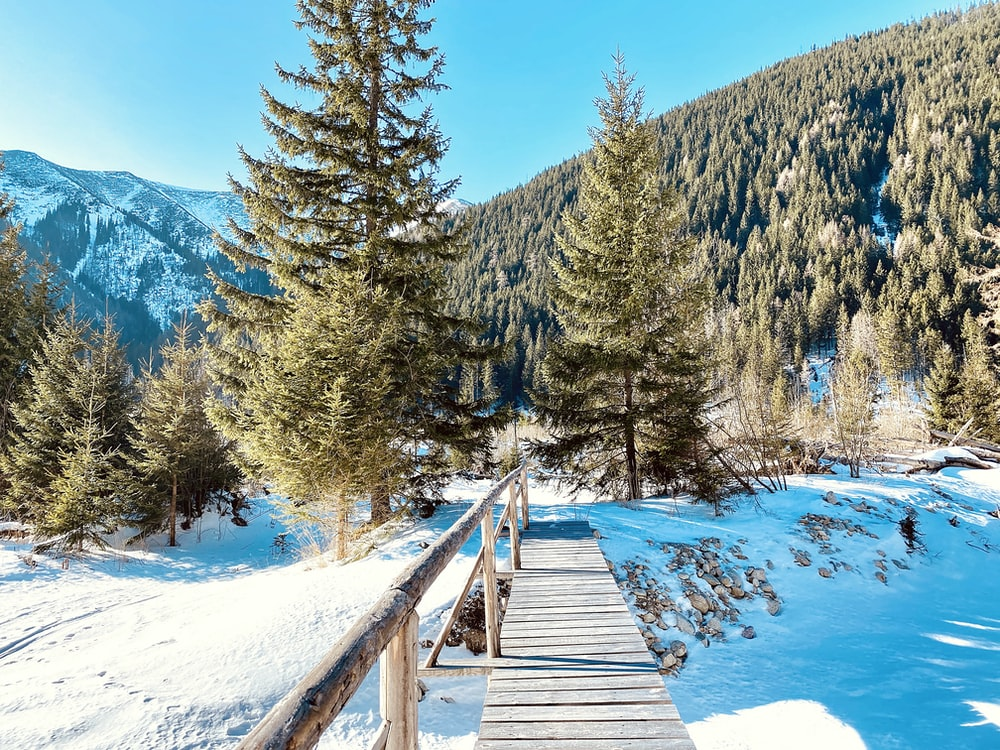 brown wooden bridge over snow covered ground near green trees during daytime