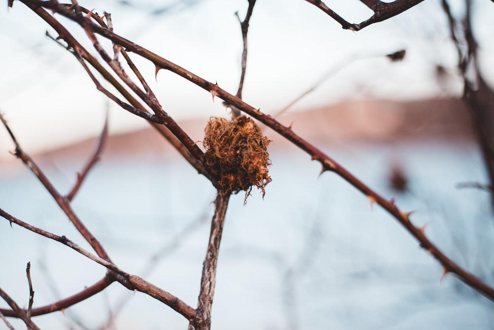 brown dried leaf on brown tree branch