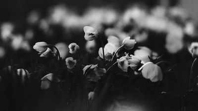 grayscale photo of white flowers earth day zoom background