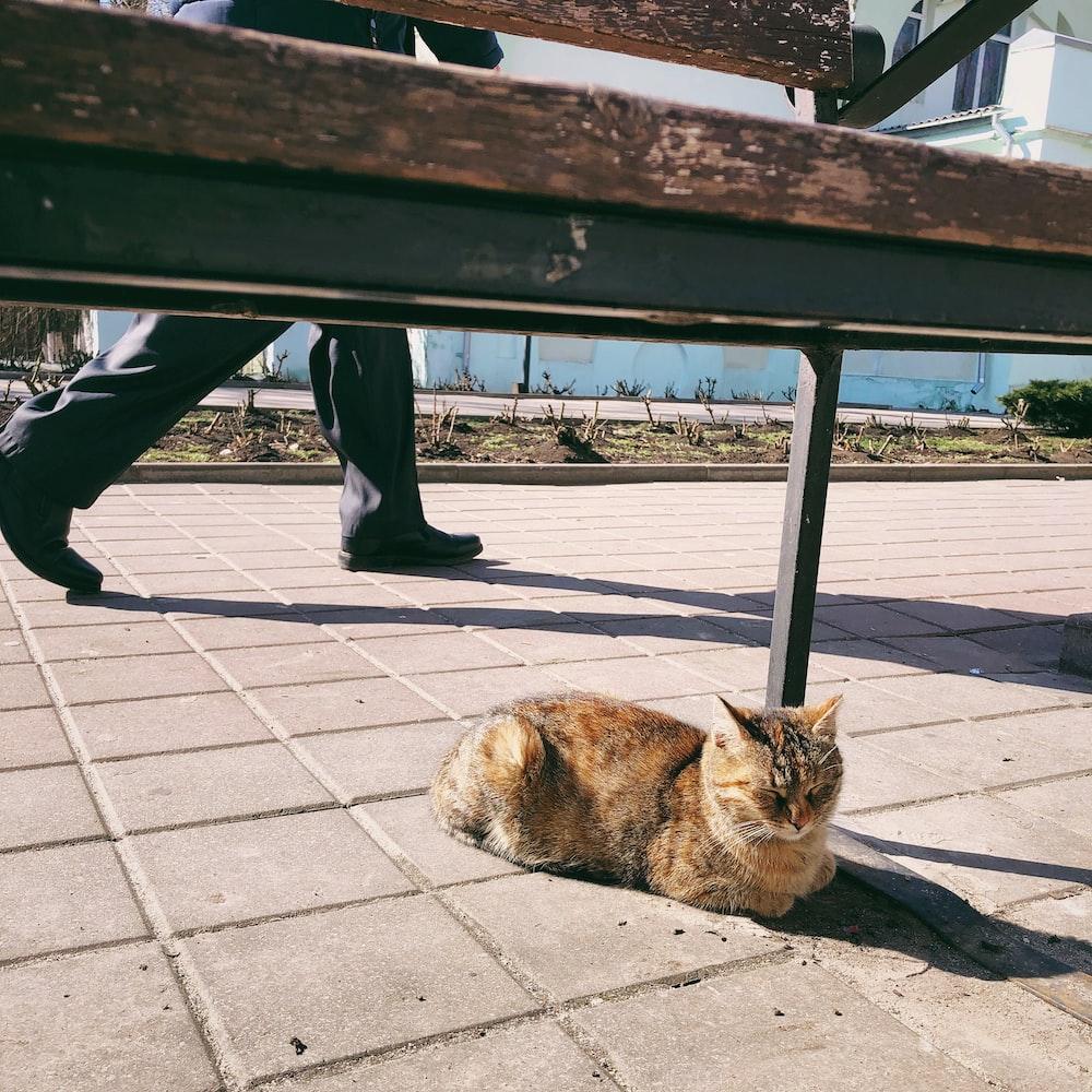 brown tabby cat lying on gray concrete floor